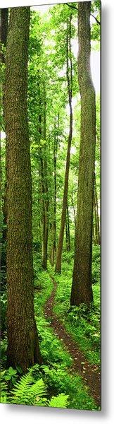 Footpath Between The Trees Metal Print by Tomchat
