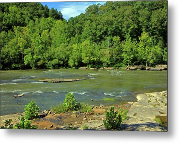 Metal Print featuring the photograph Forest At Cumberland River by Angela Murdock