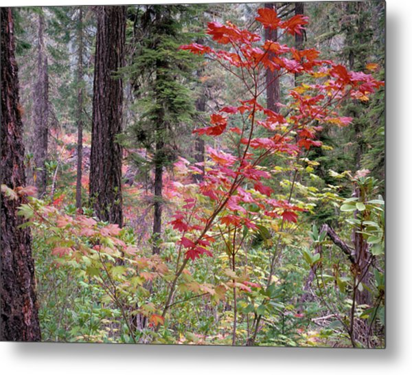 Forest Autumn Metal Print by Leland D Howard