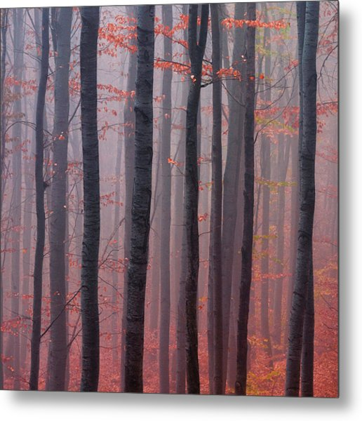 Forest Barcode Metal Print