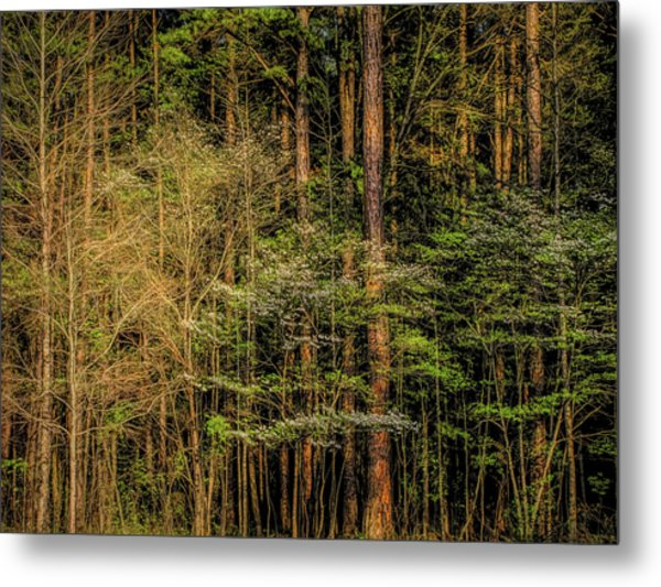 Forest Dogwood Metal Print
