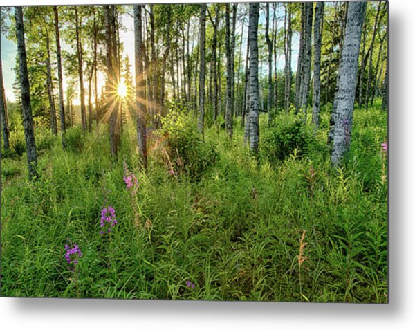 Forest Growth Alaska Metal Print