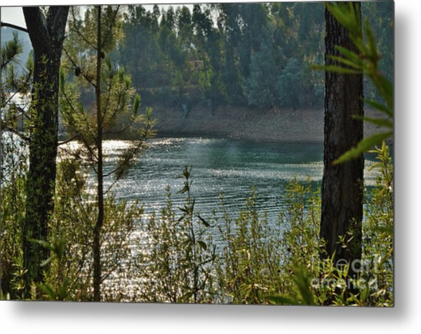 Forest Lake In Amendoa Metal Print