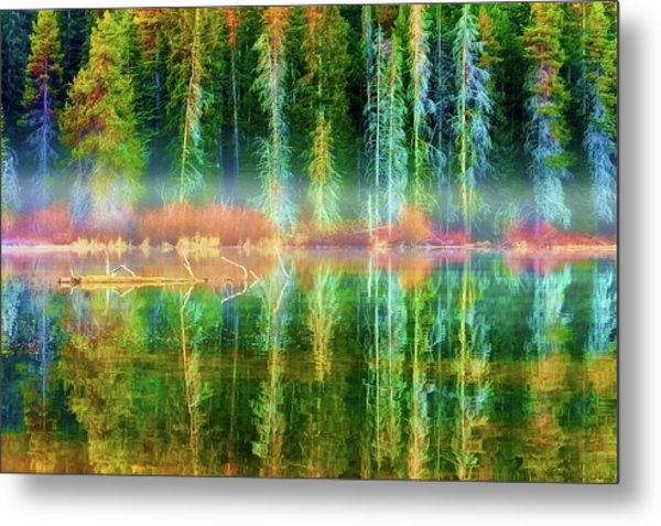 Metal Print featuring the photograph Forest Mirrored  by Dee Browning