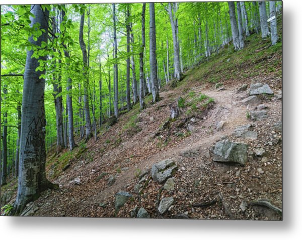 Forest On Balkan Mountain, Bulgaria Metal Print