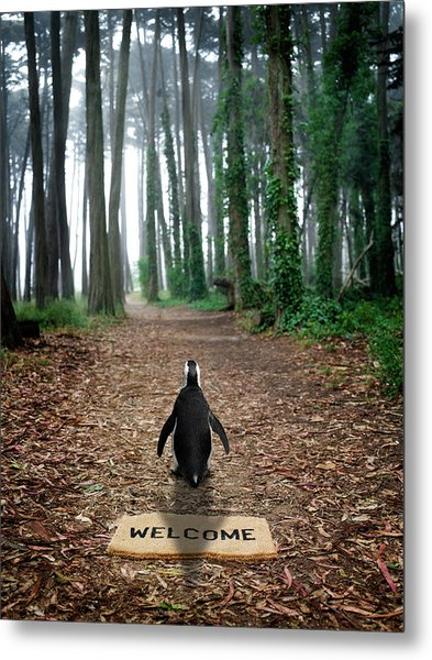Forest Penguin Metal Print by Richard Newstead