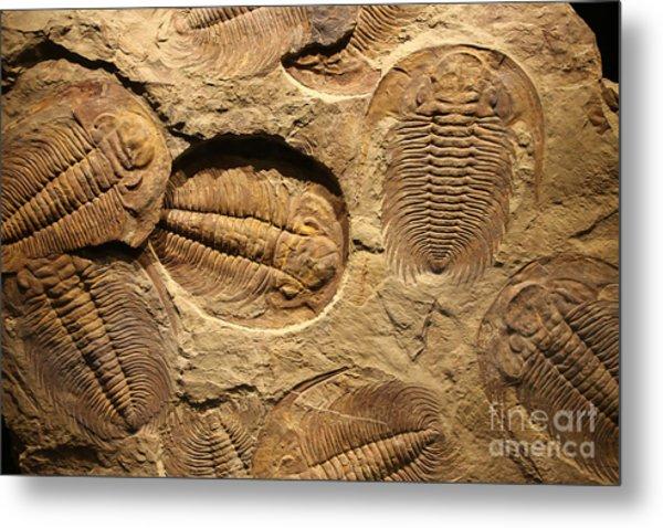 Fossil Trilobite Imprint In The Sediment Metal Print