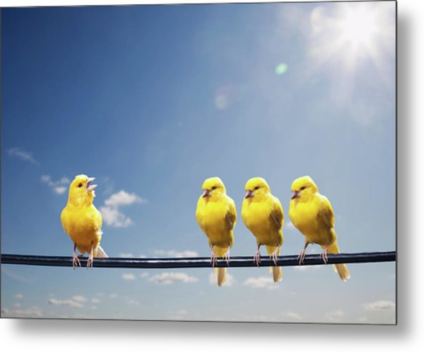 Four Canaries On Wire, One Bird Chirping Metal Print by Pm Images