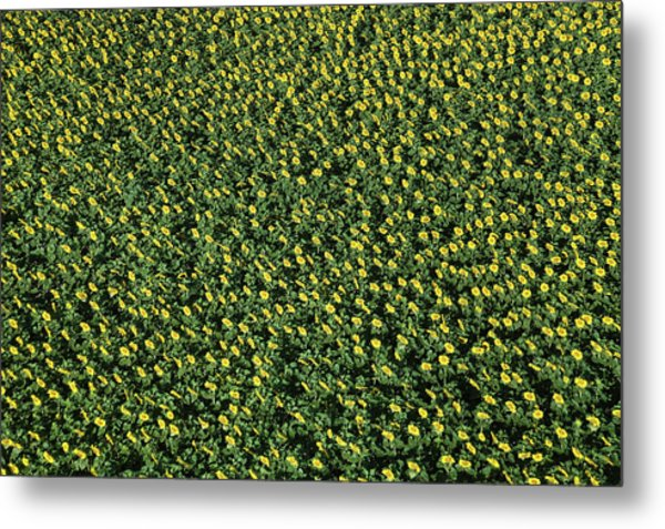 France, Allier, Vicq, Blooming Fields Metal Print by Cormon Francis / Hemis.fr