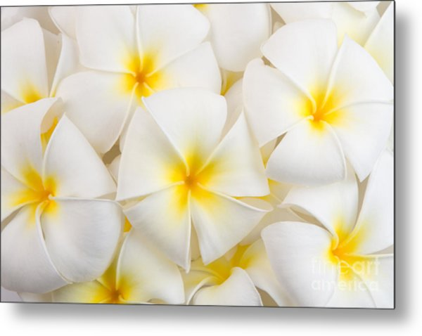 Frangipani Spa Flowers Background Metal Print