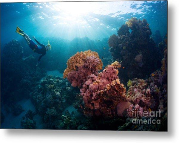 Free Diver Exploring Vivid Coral Reef Metal Print