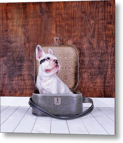 French Bulldog Puppy Inside An Old Metal Print by Maika 777