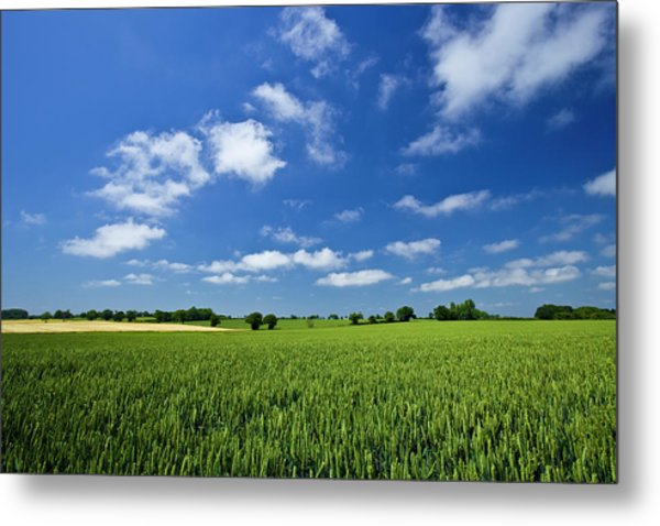 Fresh Air. Blue Skies Over Green Wheat Metal Print