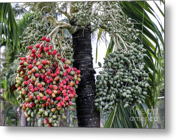 Fruity Palm Tree  Metal Print