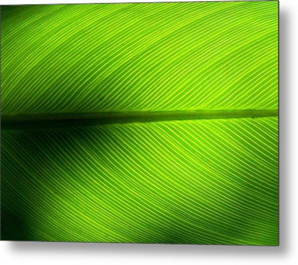 Full Frame Shot Of Green Leaf Metal Print by Kiyoshi Nasu / Eyeem