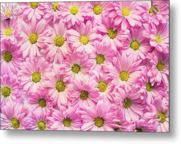 Full Of Pink Flowers Metal Print