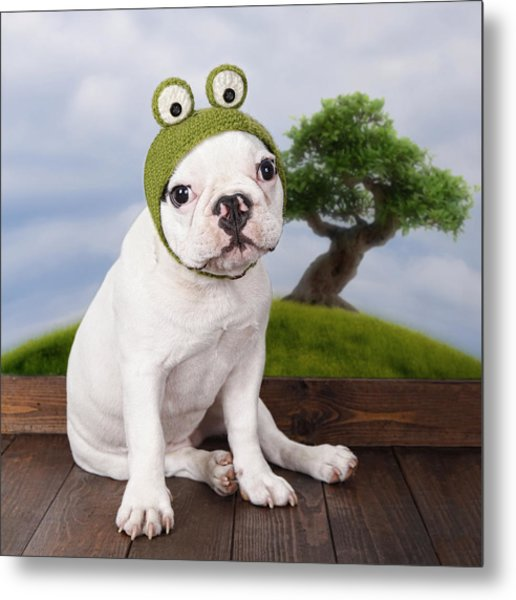 Funny French Bulldog Puppy Metal Print