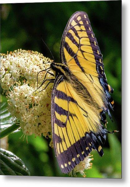 Fuzzy Butterfly Metal Print