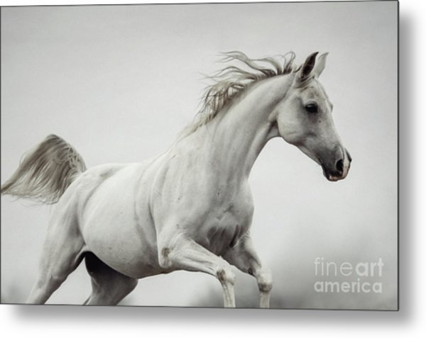 Metal Print featuring the photograph Galloping White Horse by Dimitar Hristov