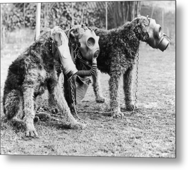 Gas Masks For Dogs Metal Print by Keystone
