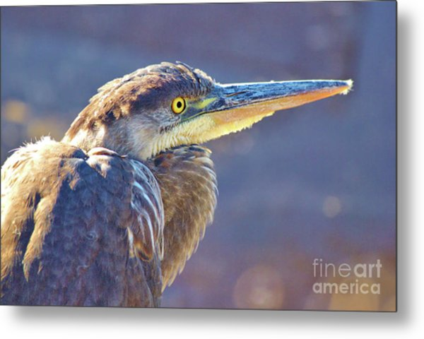 Gbh Waiting For Food Metal Print