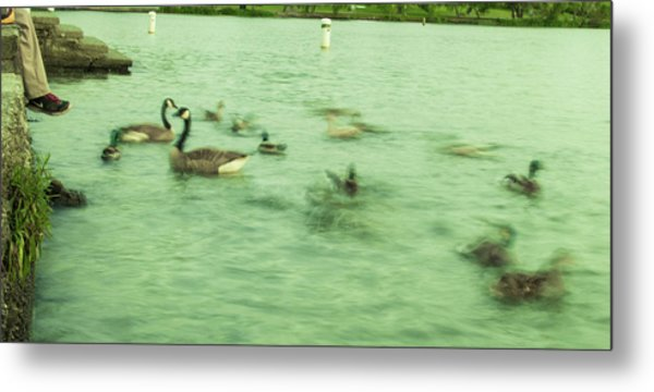 Ghost Ducks Metal Print