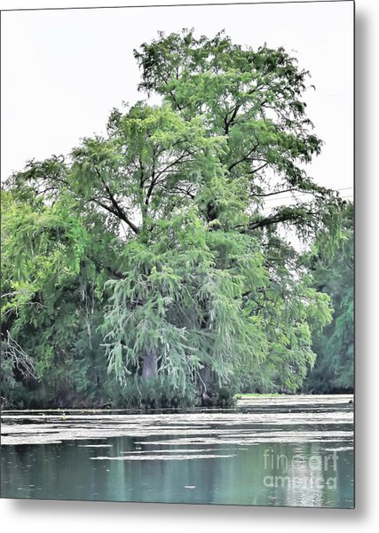 Giant River Tree Metal Print