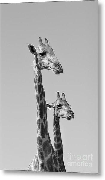 Giraffe - African Wildlife Background - Metal Print by Stacey Ann Alberts