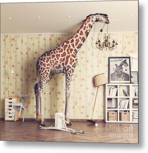 Giraffe Breaks The Ceiling In The Metal Print
