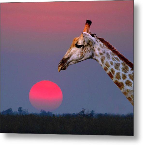 Giraffe Composite Metal Print