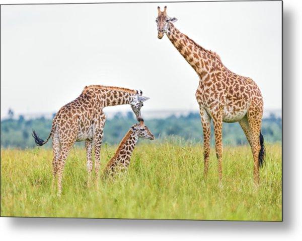 Giraffe Family Metal Print by 1001slide