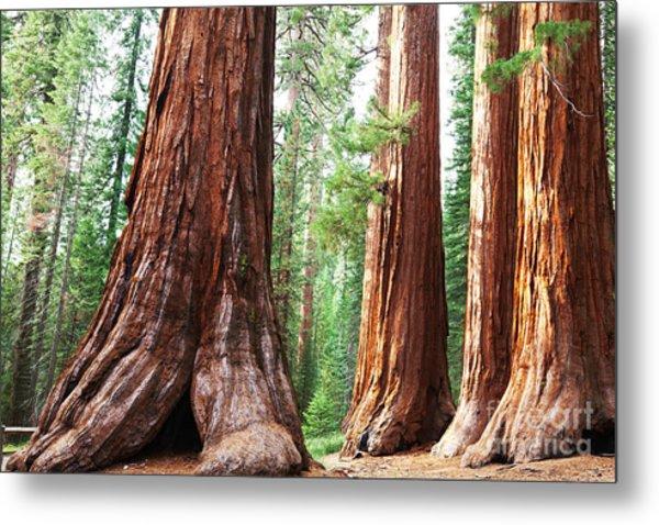 Girl On Giant Stump In Sequoia National Metal Print