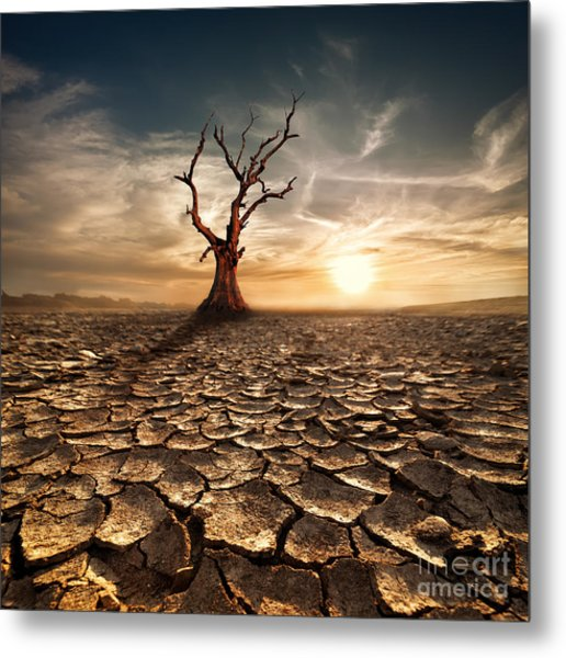 Global Warming Concept. Lonely Dead Metal Print