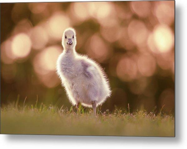 Glosling - The Glowing Gosling Metal Print