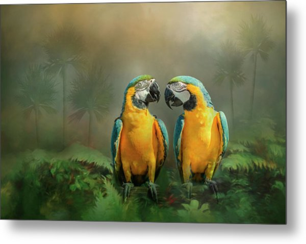 Gold And Blue Macaw Pair Metal Print