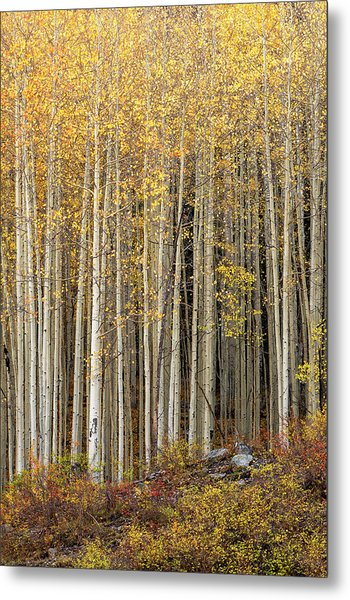 Metal Print featuring the photograph Gold Dust by Angela Moyer