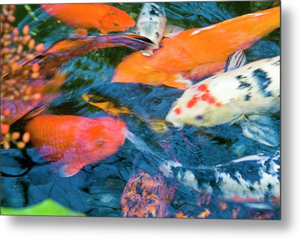 Gold Fish Metal Print by By Ken Ilio