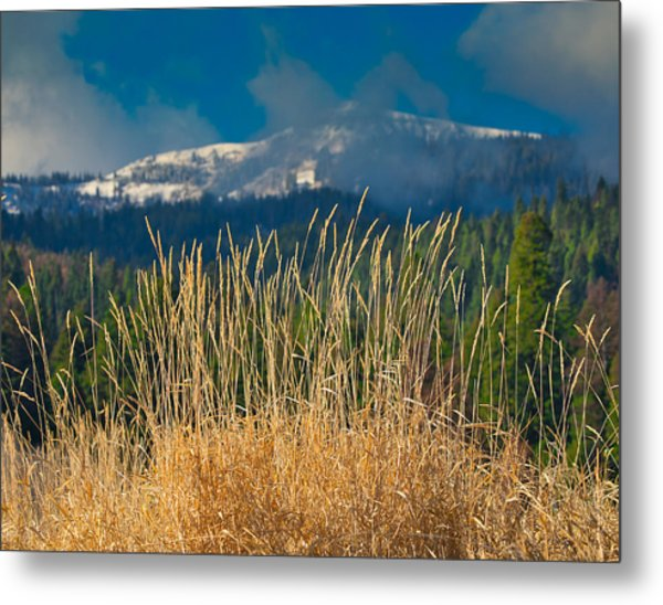 Gold Grass Snowy Peak Metal Print