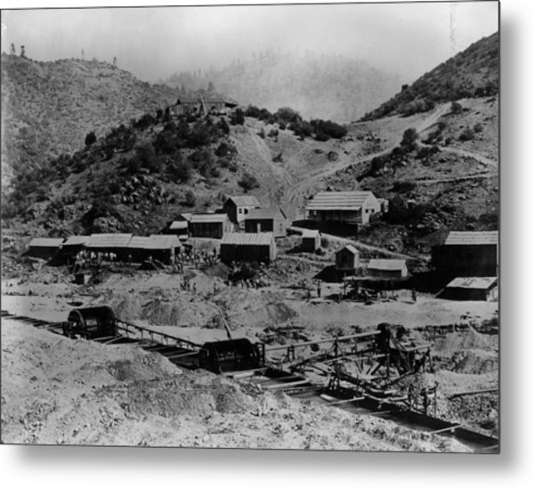Gold Rush Metal Print by E. P. Vollum