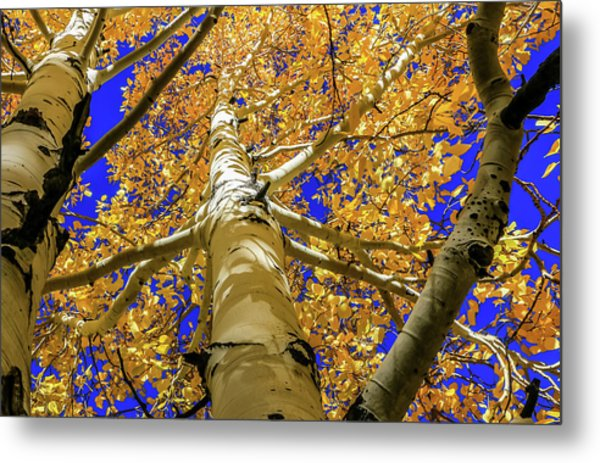 Golden Aspens In Grand Canyon Metal Print