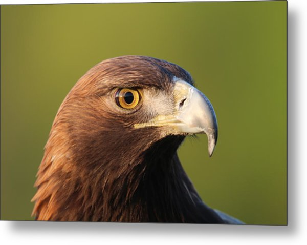 Golden Eagle 5151801 Metal Print