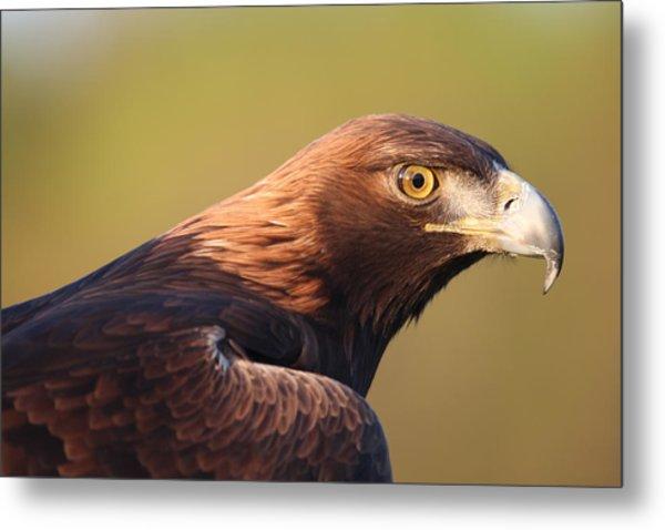 Golden Eagle 5151806 Metal Print