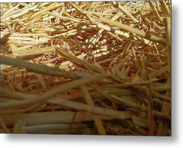 Golden Straw Bed Metal Print