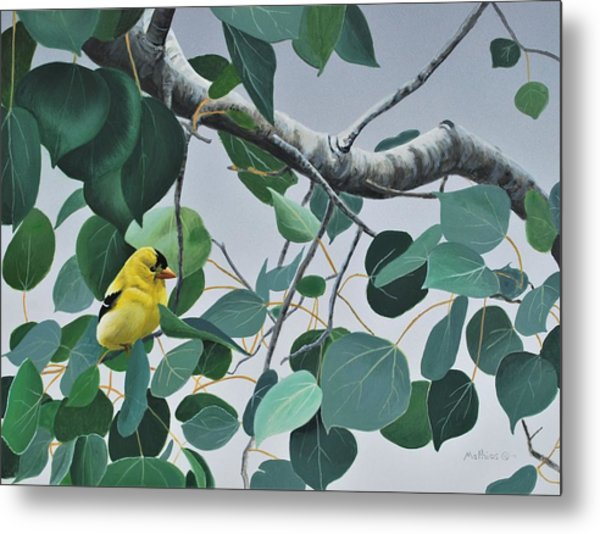 Goldfinch And Aspen Metal Print