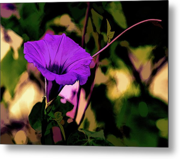 Good Morning Glory Metal Print