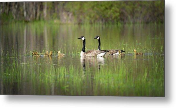 Goose Family #5 Metal Print