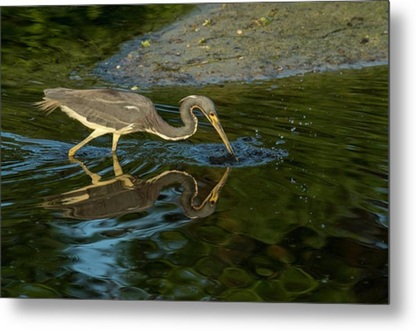 Metal Print featuring the photograph Gotcha by Donald Brown