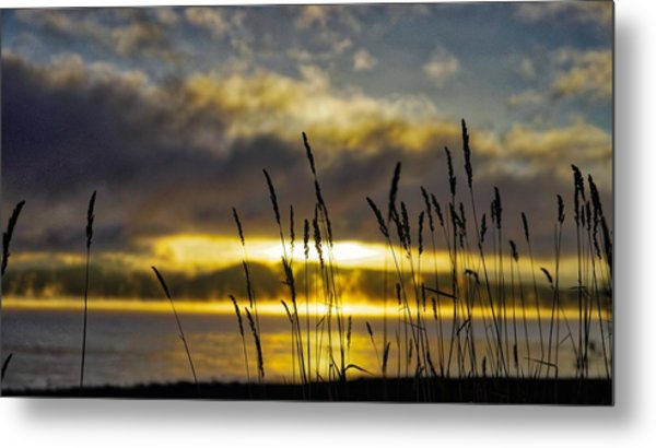 Grassy Shoreline Sunrise Metal Print