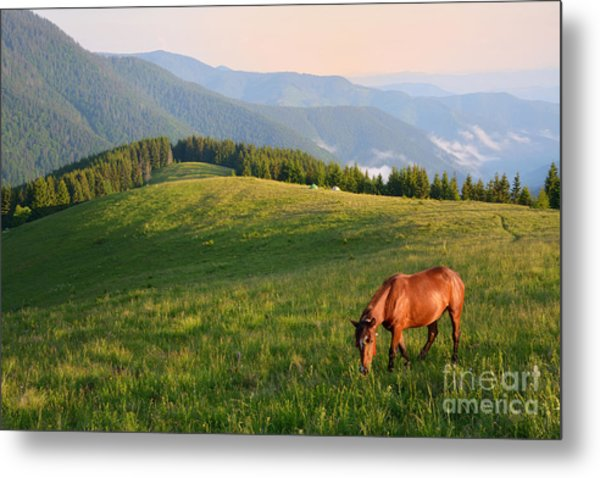 Grazing Horse On Mountain Pasture Metal Print