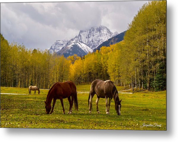 Grazing In Aspen Metal Print